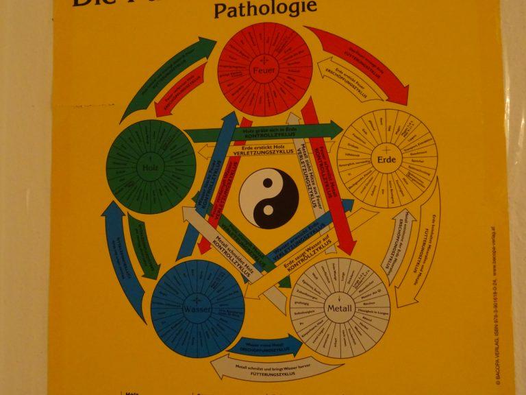 Die 5 Wandlungsphasen in der chinesischen Medizin